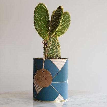 Cactus Pot Collection Papier Peint Bleu et Doré
