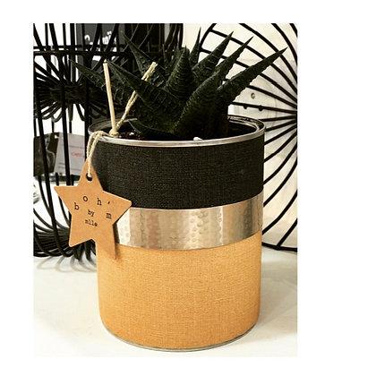 Cactus Pot Collection Lin Cumin