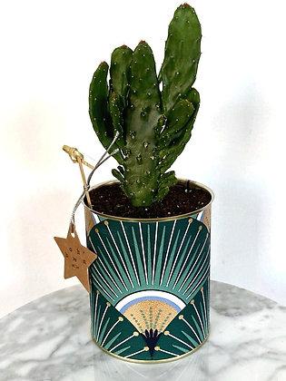Cactus Pot Collection Papier Peint Eventail Vert et Doré