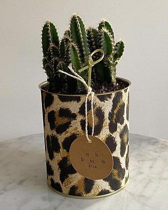 Cactus Pot Collection Léopard