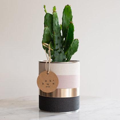 Cactus Pot Collection Lin Noir Rose Poudré, Crème, Cerclage Argent