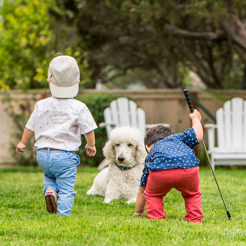 twin toddlers playing golf with big white dog in San Diego backyard