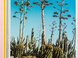 'Evergreen' and Cactus Country