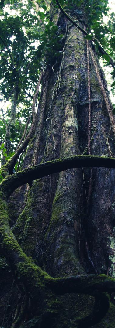 METALPRINTtree-cr-1.jpg
