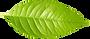 Única folha verde