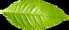 Sociaal Ecologisch Park