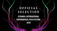 Animal Kingdom @ Istanbul International Experimental Film Festival