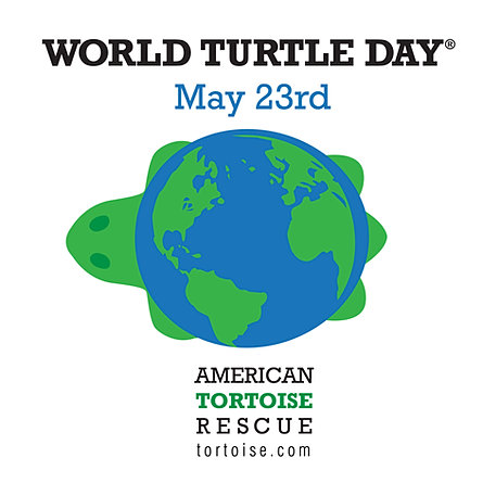 Image result for World Turtle Day