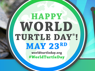 "American Tortoise Rescue ""Shellebrates"" World Turtle Day® on May 23, 2020"