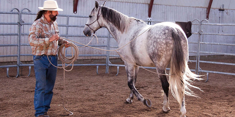 Private Horse Clinic and show