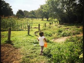 20·12 - Il faut cultiver notre jardin