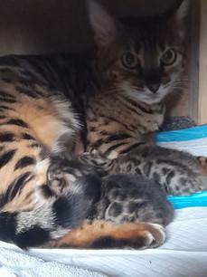 Mama und Kitten