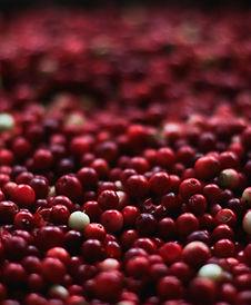 berries-1851161_1920.jpg