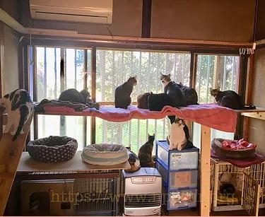 Interior da cat house
