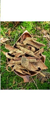 Hawaiian Acacia Confusa Root Bark The Acacia Store