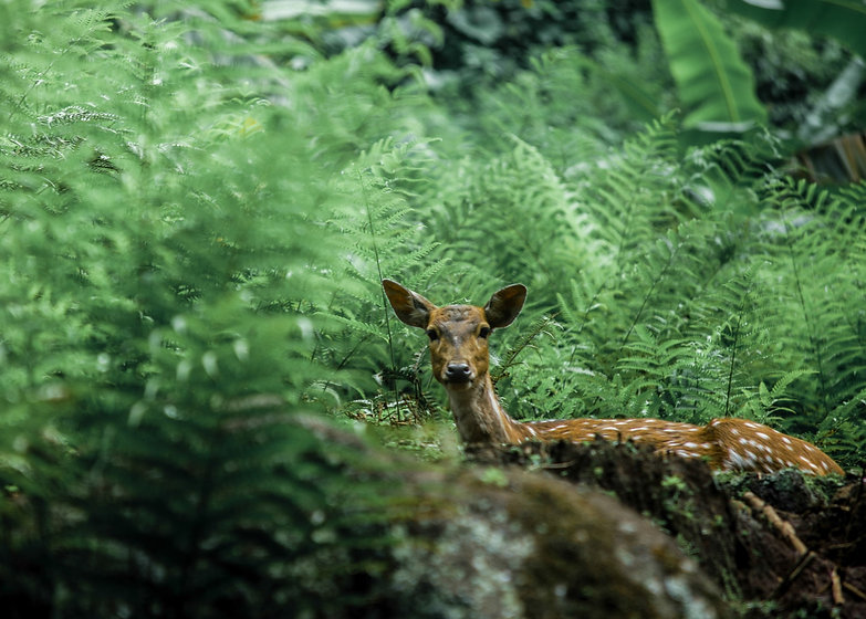 A deer in the middle of forest_edited.jpg