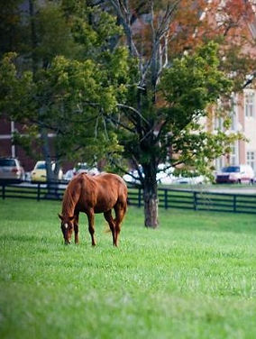 view%20of%20horse%20farm%20with%20campus
