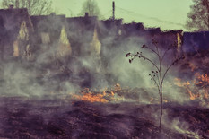 Firescaping Class.jpg
