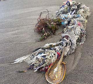 Fishing nets dead stingray crop.jpeg