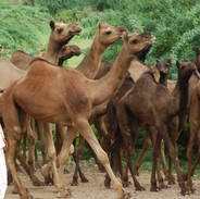 Juli 2007- Rajasthan 163.jpg