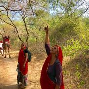 Foraging Raika Journey