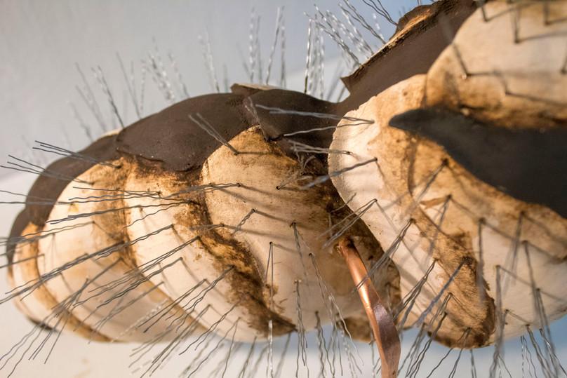 Wasp Abdoman (detail)