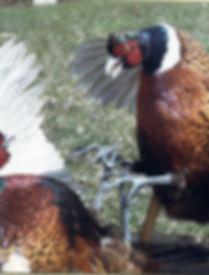 BIRDS0183.jpg