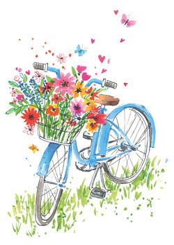 DK Bicycle