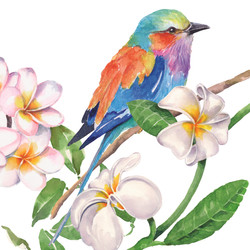 Bird Tropical B