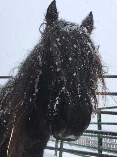 2019 Maydawn winter.JPG