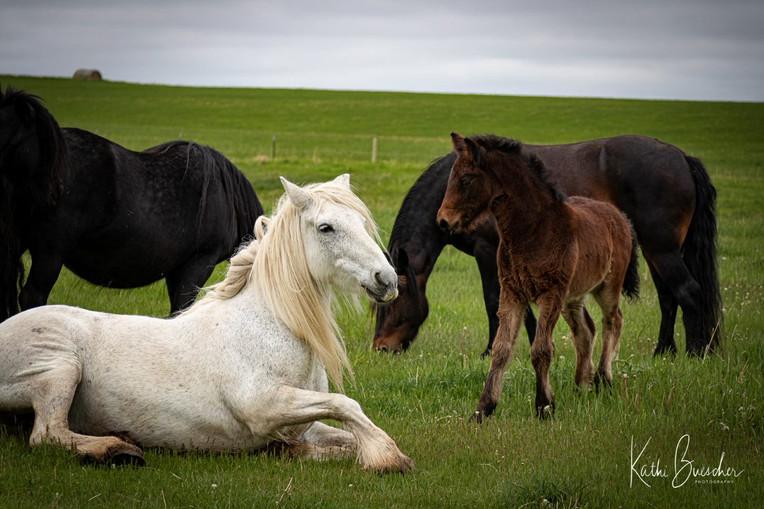 Reclining pony_6769.jpg