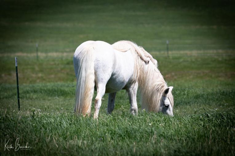 White pony_6248.jpg