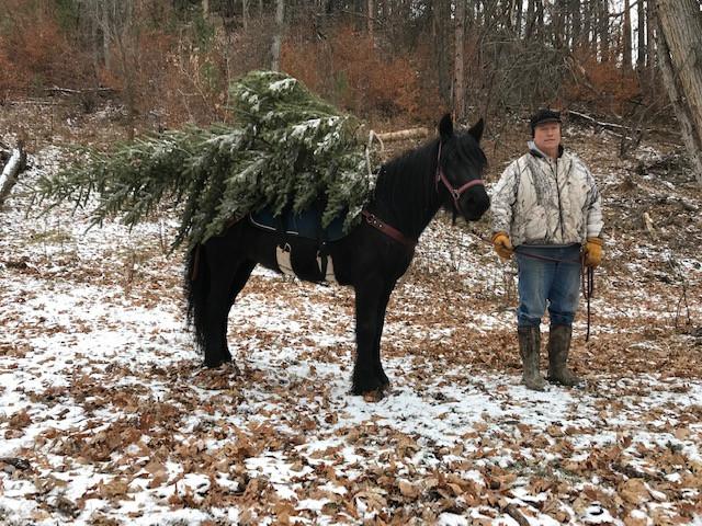 Hope with Christmas Tree 2018.jpg