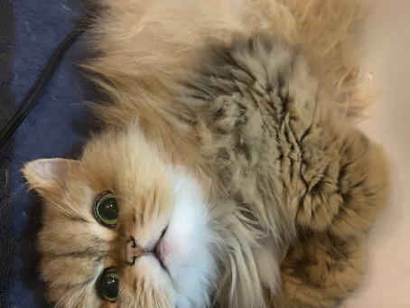 猫の手術でした。