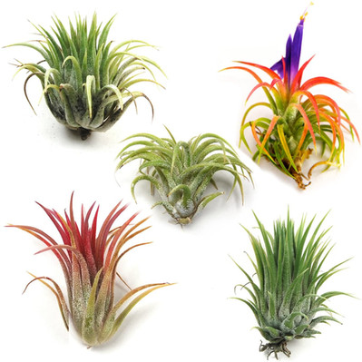 Air Plants and Small Pots for the RV