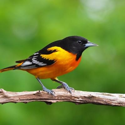 Merlin Bird ID App
