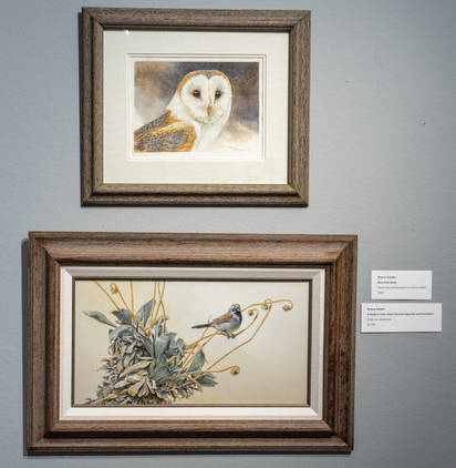 Barn Owl Study (top), Black-throated Sparrow and Encelopsis