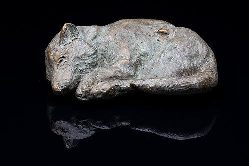 Kitt Fox by Mark Rossi