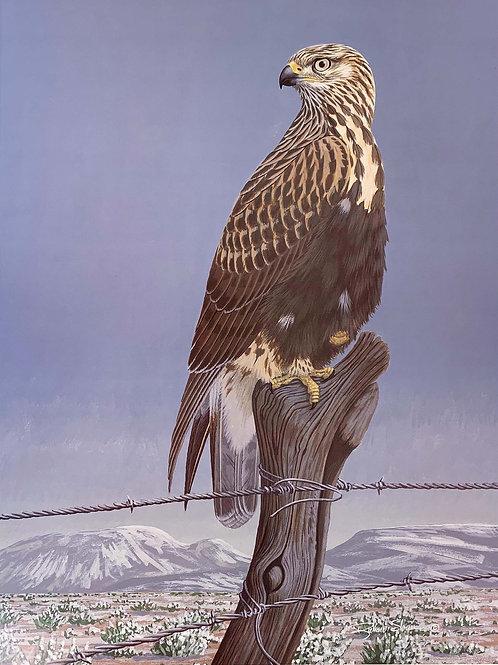 Rough-legged Hawk by Richard Sloan