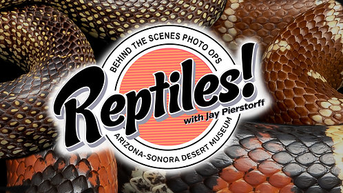 Reptiles: Photo Ops
