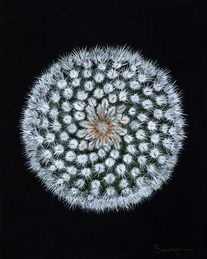 CS5 Hedgehog cactus