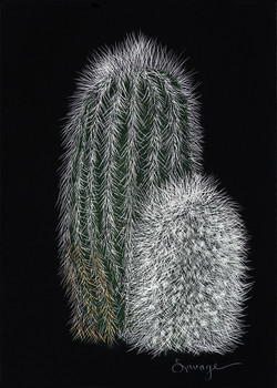 CSsb2 Lemon Ball cactus