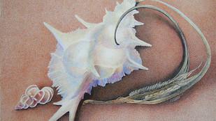Gildow-Shells & Claw.jpg