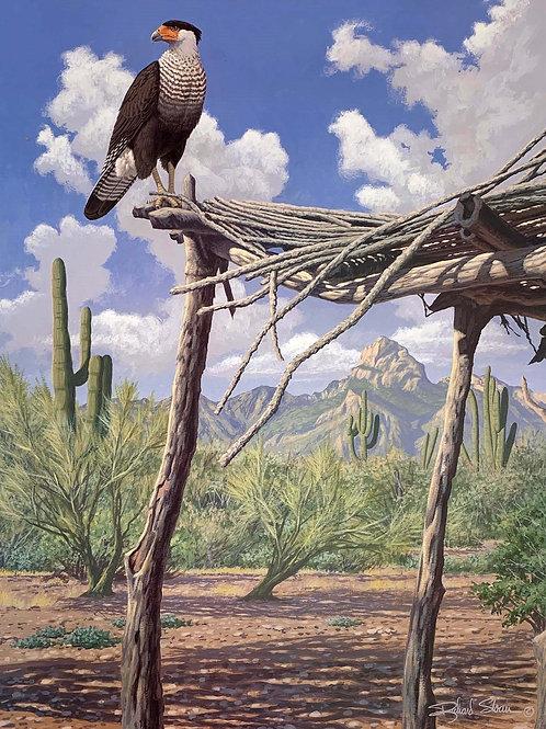 Crested Caracara by Richard Sloan