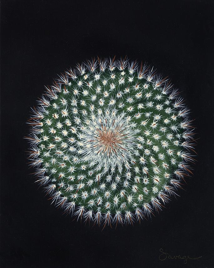CS3 Pincushion cactus