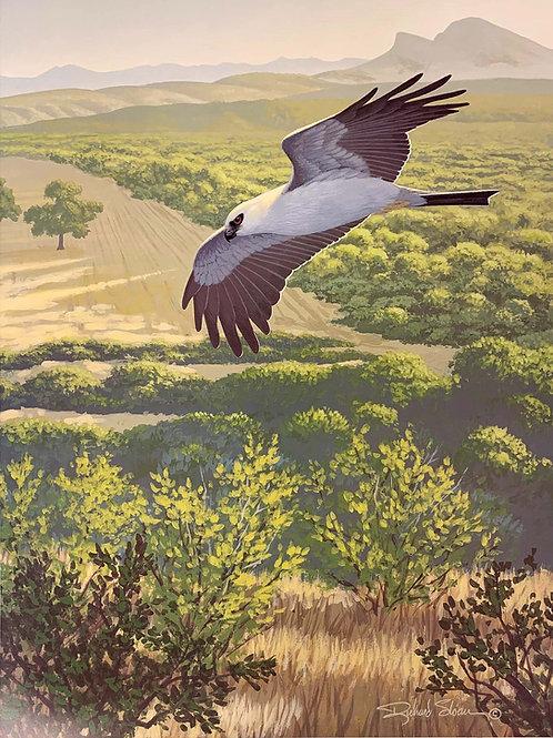 Mississippi Kite by Richard Sloan