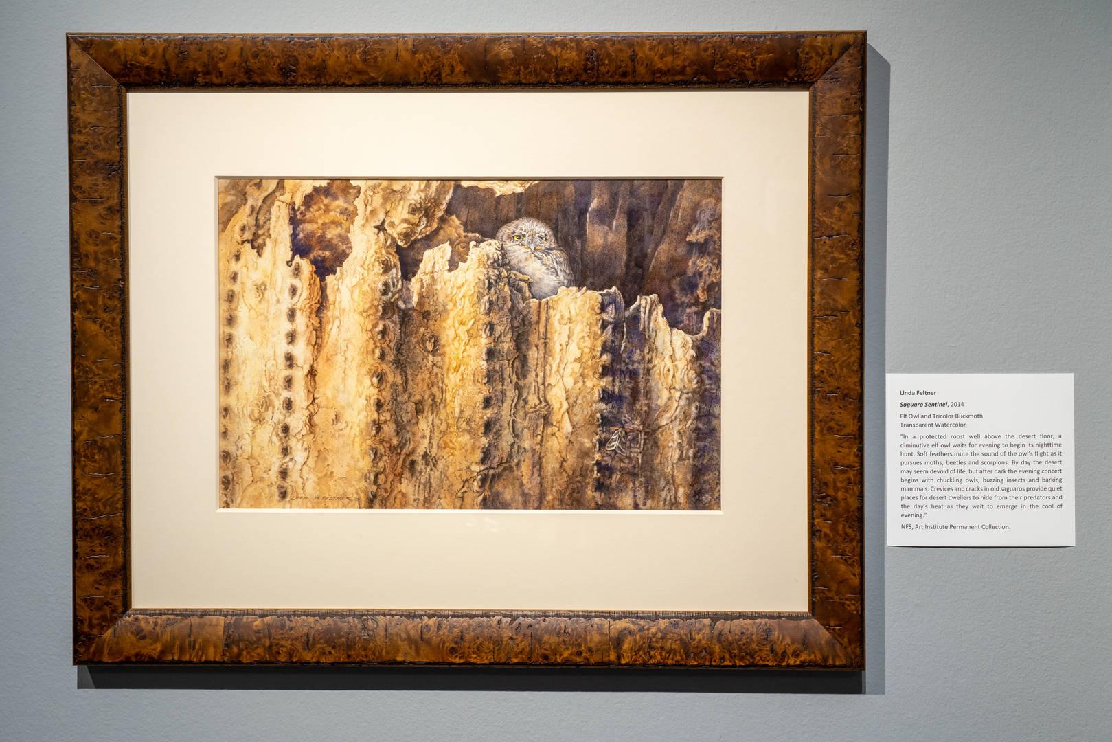 Saguaro Sentinel