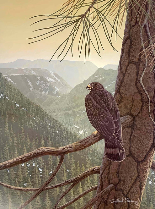 Zone-tailed Hawk by Richard Sloan