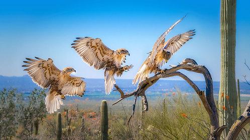 Flying Bird Composites (Oct. 23)