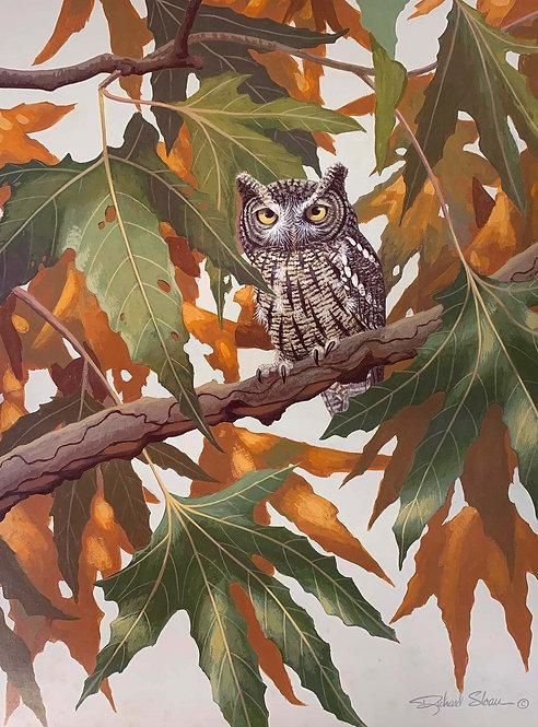 Whiskered Screech Owl by Richard Sloan